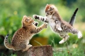 1 марта – Всемирный день кота