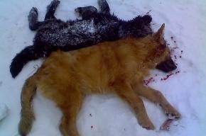 В Красном Бору перед домом Розы Власовой пройдет пикет защитников животных