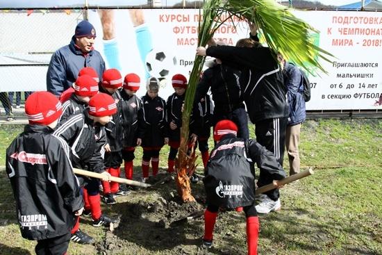 Юные футболисты посадили дерево на аллее Валентина Бубукина: Фото