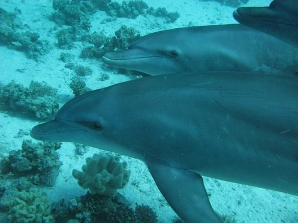 Китовая акула - в 10 метрах!: Фото