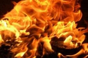 При пожаре в Кронштадте погиб мужчина