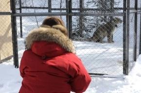 Владимир Путин увидел, чем отличается ирбис от леопарда