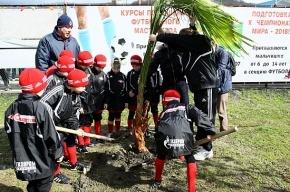 Юные футболисты посадили дерево на аллее Валентина Бубукина