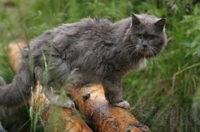 Владелица магазина «потеряла» арестованный кошачий корм