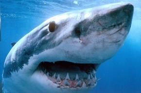 Голубая акула запрыгнула в лодку к американцам