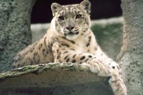 «Наши» собирают деньги на содержание «олимпийских зверей» в Московском зоопарке