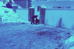 В Петербурге медведь напал на женщину