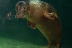 Тюлени начали светлеть