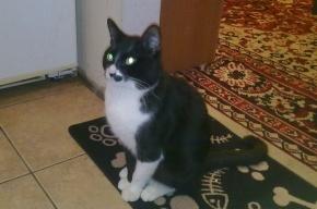 Людмила ищет своего котика