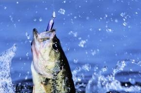 Любительскую рыбалку могут сделать платной