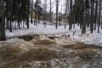 В Павловске пилят толстые деревья: Фоторепортаж
