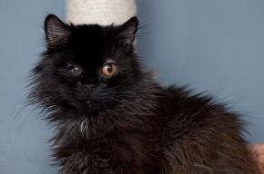 После гибели хозяйки в квартире остались 62 кошки!