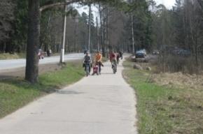 Велодорожку в Курортном районе пора привести в порядок