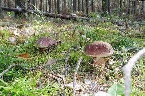 «Удивительный мир грибов» в Петербурге