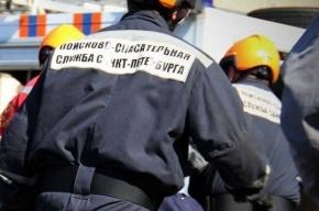 Петербургские спасатели помогли птице и котенку