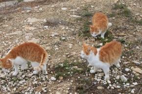 Мое лучшее фото из Греции: Кошачий остров