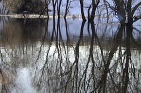 Паводок в Ленинградской области начал спадать
