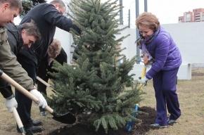 Валентина Матвиенко сажала деревья и помогала красить мост