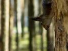 К посетителям лесопарка пришла белочка: Фоторепортаж