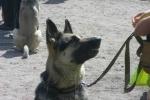 Фоторепортаж: «В лесопарке на улице Бутлерова прошел собачий праздник»
