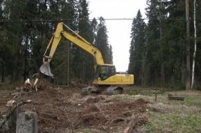 «Зелёные» на время остановили работы в Химкинском лесу