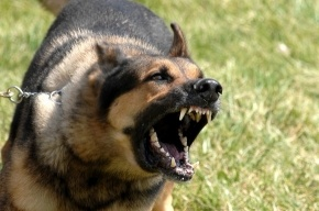 Шесть женщин отняли собаку у петербуржца и ограбили