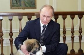 Путин о конкурентах Общероссийского народного фронта: «Они все повторюшки»