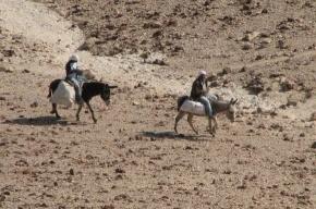 Бедуины осободили трассу на Шарм-Эль-Шейх