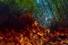 В Ленобласти возможны сильные лесные пожары