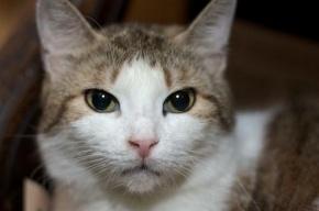 100 кошек и 70 собак хотят домой