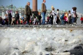 Дворцовая площадь покрылась крыльями ангелов: фоторепортаж с Дня города
