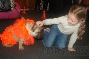 DOG FASHION SHOW-2011: маленькие собачки послужили большому делу