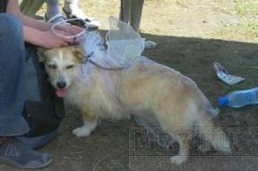 В лесопарке на улице Бутлерова прошел собачий праздник