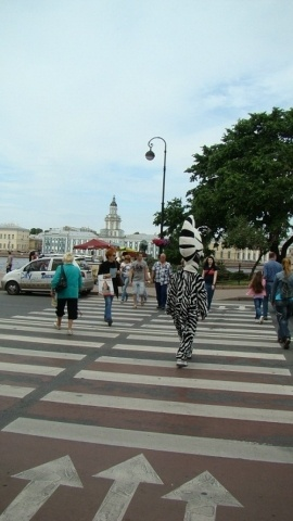 Зебры помогали пешеходам на Дворцовой площади: Фото