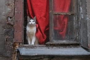 Судебные приставы обязали кошку сидеть в комнате