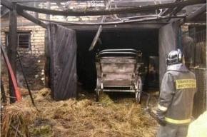 При пожаре на ипподроме Ульяновска сгорели 25 лошадей
