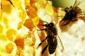 Союз оленеводов и Союз пчеловодов влились в ряды «фронтовиков»