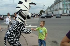 Зебры помогали пешеходам на Дворцовой площади