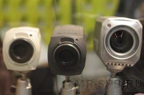 Видеокамеры в лесах Ленобласти появятся к середине июля