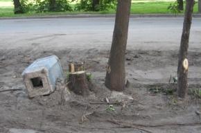 Благоустройство на улице Корнеева: меньше зелени, больше пыли