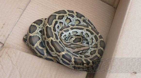 Спасатели о найденном питоне: Хотим отдать змейку в руки специалистов: Фото
