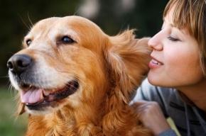 В Кировском районе домашним животным окажут бесплатную помощь