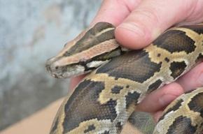 Спасатели о найденном питоне: Хотим отдать змейку в руки специалистов