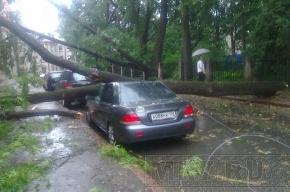 На улице Академика Павлова на Mitsubishi Lancer упало дерево