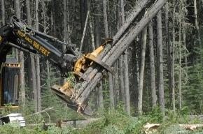 «Зелёные» призывают контролировать строительство трассы через Химкинский лес