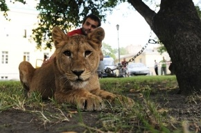 Хозяин львицы Донны готов ее отдать