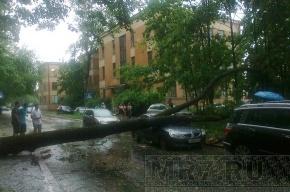 В Петербурге ветром повалило 7 деревьев и столб