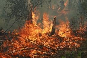 Парашютисты-десантники тушат лесные пожары в Архангельской области