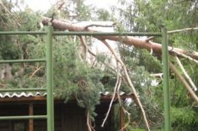 В результате урагана в Петербурге упало как минимум 18 деревьев