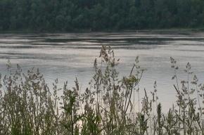 Комары и мошки из Колпино никуда не улетали